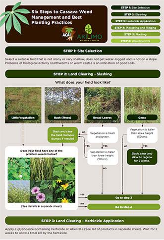 Best Planting Cassava - Nigeria Hectare