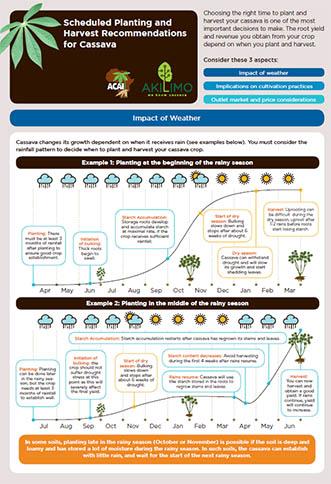 Scheduled Planting and Harvest Cassava - Nigeria Acre